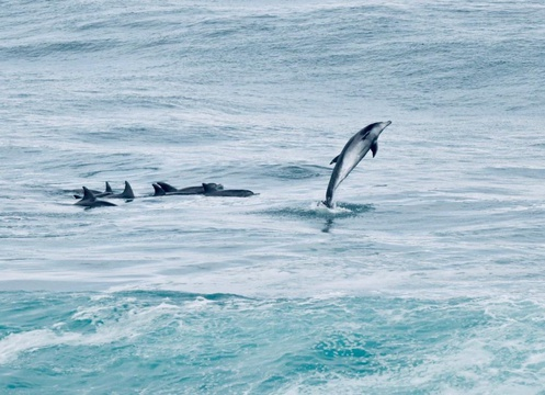 wale watching, dolphins, beach, see, blue flag beaches, stilbaai, western cape, south africa, coast, accommodation, luxury stays
